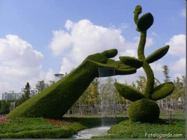 Lindo jardim (4)