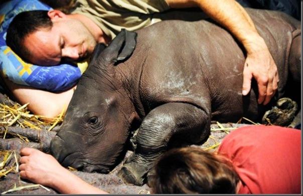 Filhotes com seus pais no mundo animal (14)