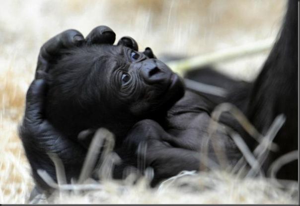 Filhotes com seus pais no mundo animal (7)