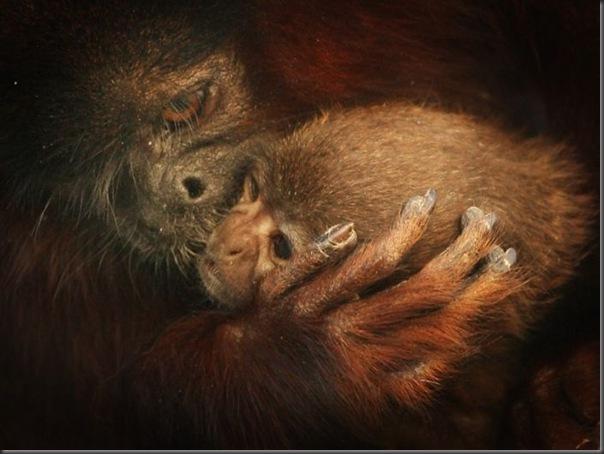 Filhotes com seus pais no mundo animal (5)