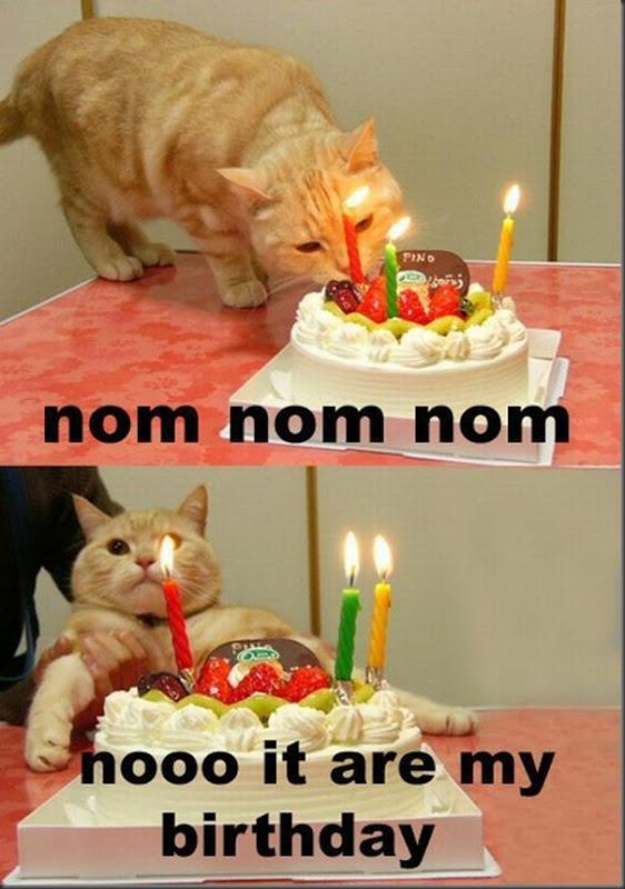 Comemorações de aniversário de gatos (25)