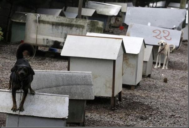 Favela para cães no Brasil (5)