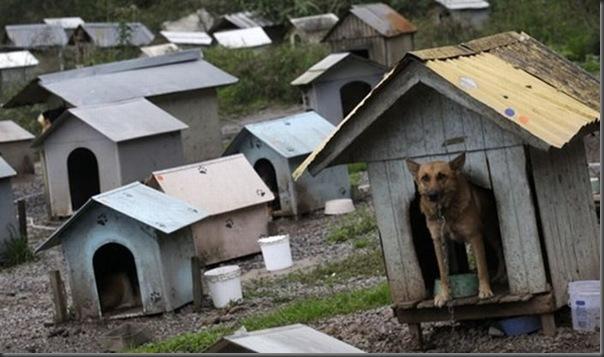 Favela para cães no Brasil (3)