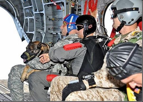 Cão salta de pára-quedas (5)