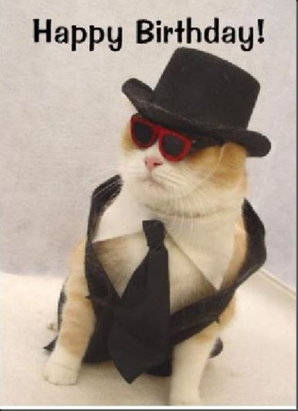 Comemorações de aniversário de gatos (6)