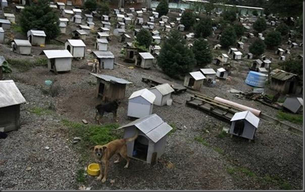 Favela para cães no Brasil
