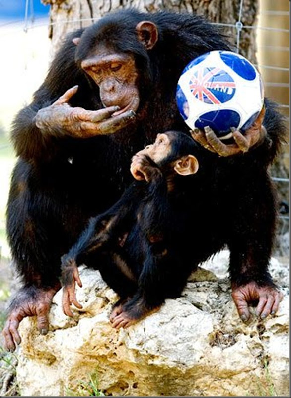 Animias torcedores na copa do mundo na africa (5)