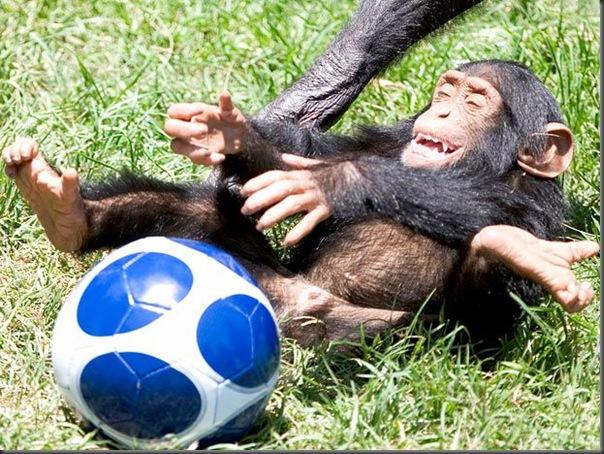 Animias torcedores na copa do mundo na africa (9)