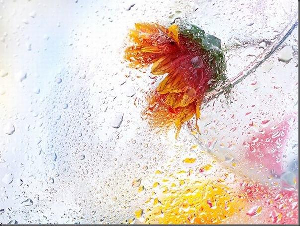 Lindas imagens de flores (30)