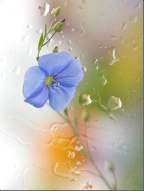 Lindas imagens de flores (29)