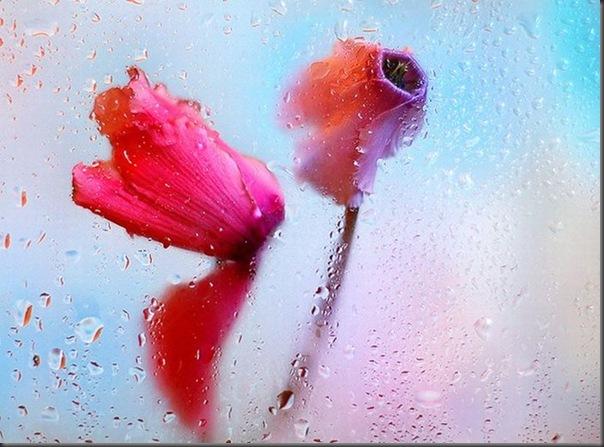 Lindas imagens de flores (28)