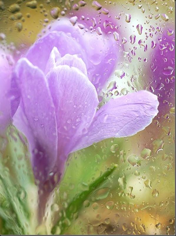 Lindas imagens de flores (27)