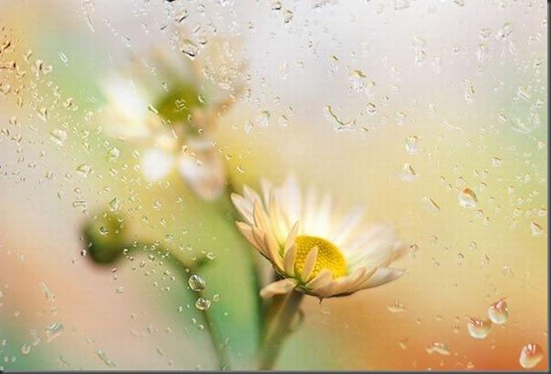 Lindas imagens de flores (26)