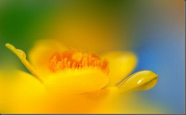 Lindas imagens de flores (7)