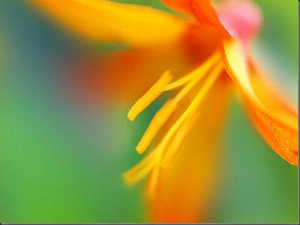 Lindas imagens de flores (4)