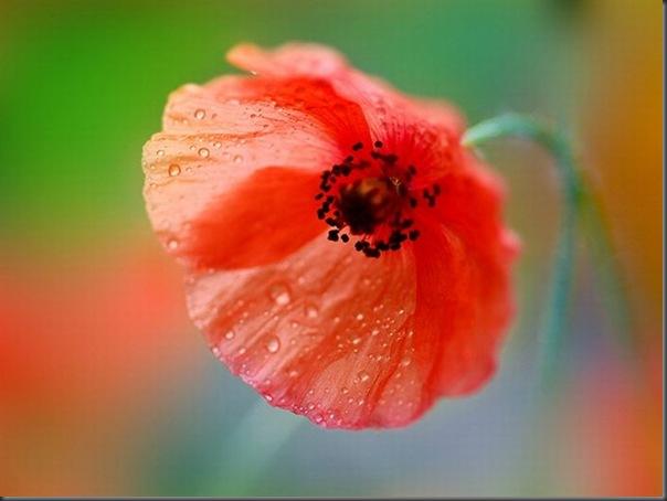 Lindas imagens de flores (2)