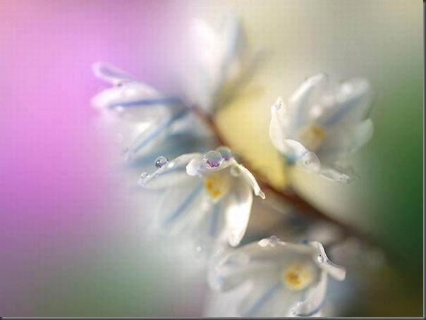 Lindas imagens de flores (1)