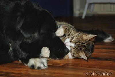 hun og katt