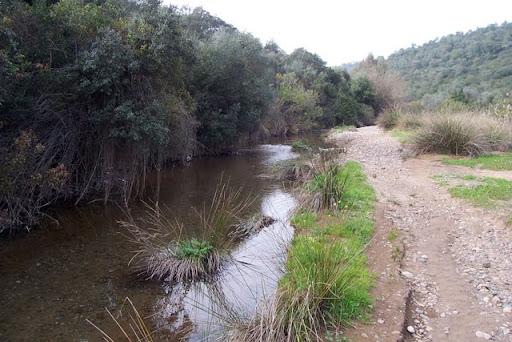 Arroyo de Pedroche
