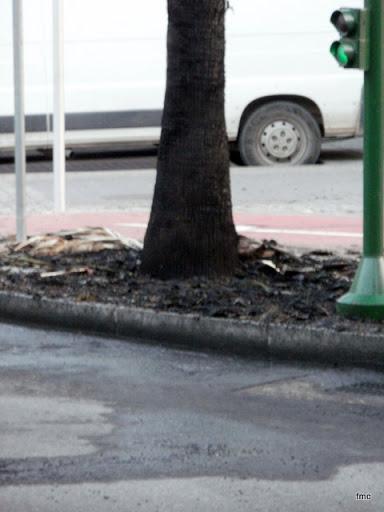 Base de la palmera quemada.