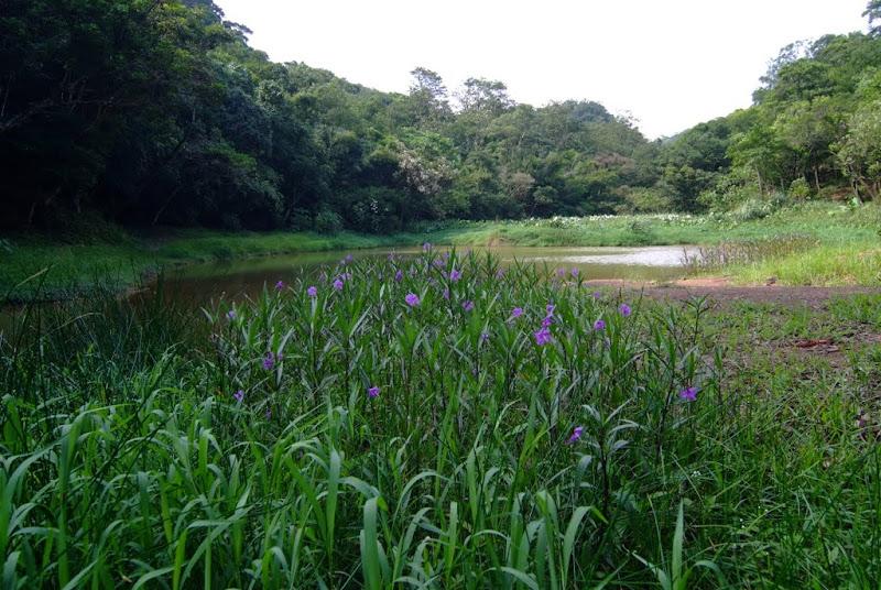 山中訪翠池