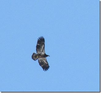 Eagle02-11-11a