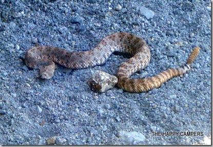 snake 002