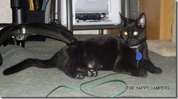 cat 004