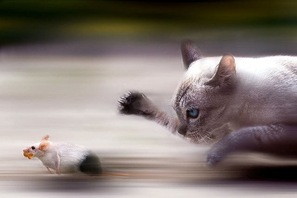 gatoerato