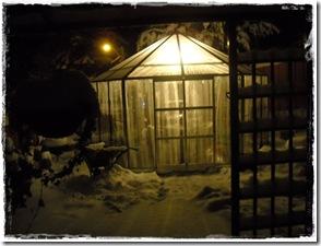 Vinterstemning drivhuset