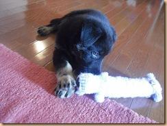 Zoey Puppy 018