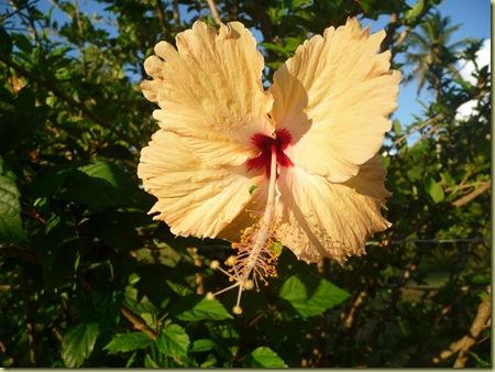 Eua flower
