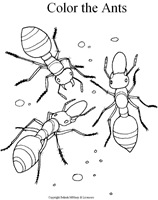 11ant_colorsheet