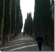 paesaggi 4