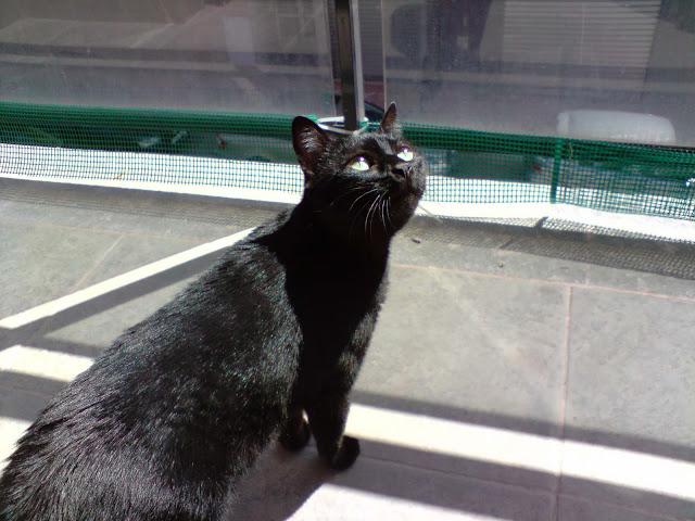 ¡¡¡Pepita ya está en casaaaaaaaaaaaaa!!!! :D - Página 2 P260410_12.25