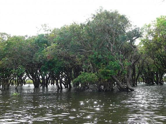 kampong (1)