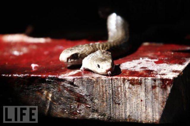 snake-burger (8)