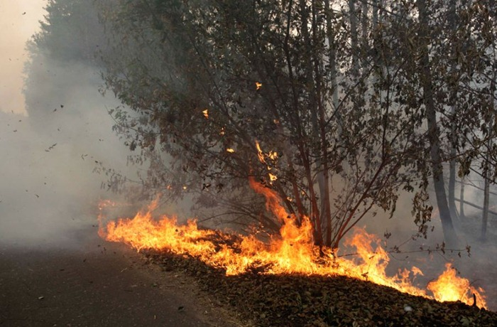 russia-forest-fire (29)
