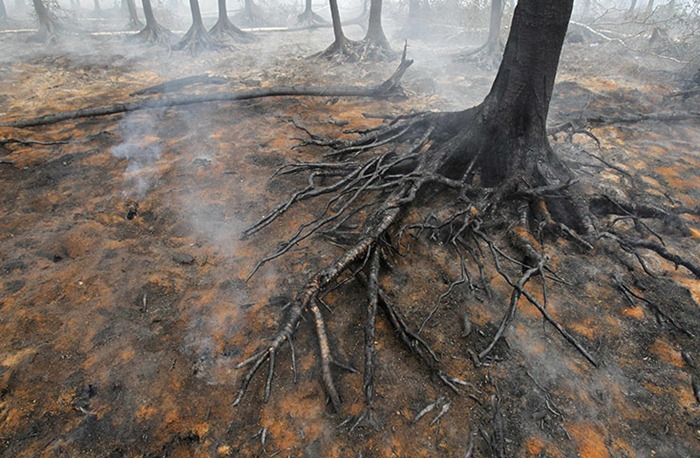russia-forest-fire (41)