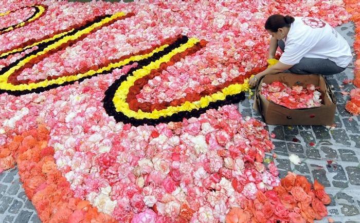 brussels-flower-carpet (2)