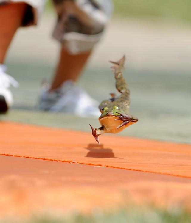 frog-jump-festival (6)