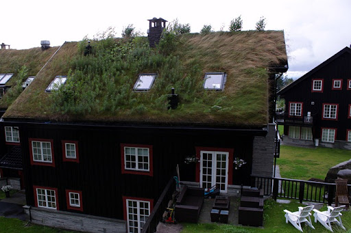 Green Roof Norway (11)