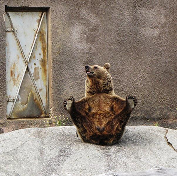 bear-yoga (2)