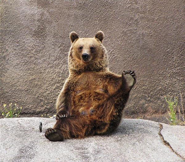 bear-yoga (3)