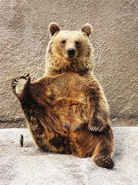 bear-yoga (4)