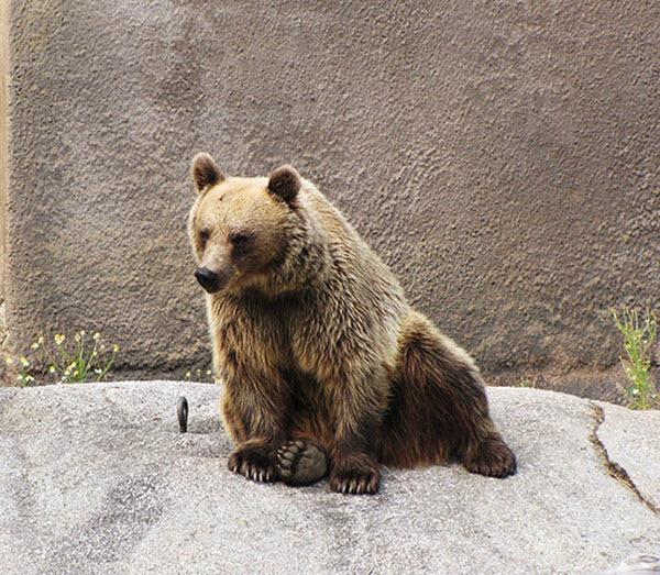 bear-yoga (5)