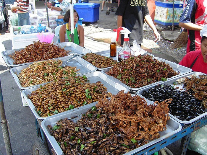 food-as-insects (8)