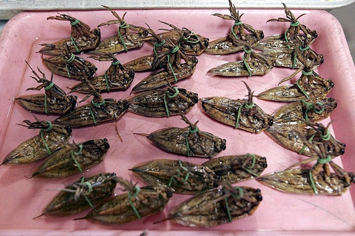 food-as-insects (11)