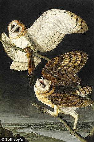 birds-of-america (6)
