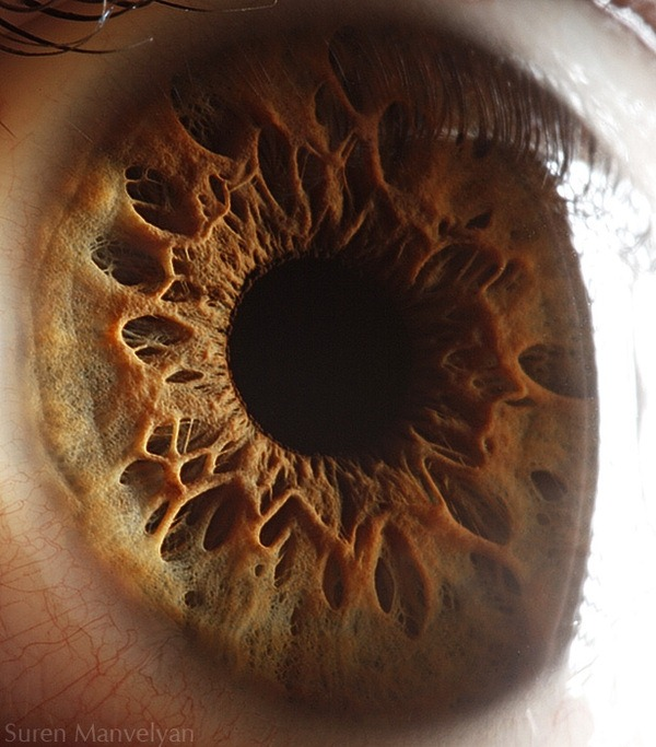 macro-eyes (2)